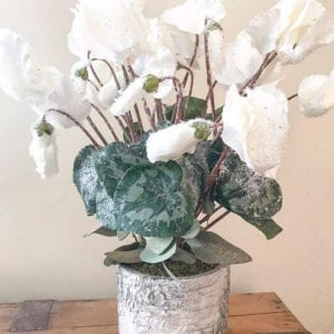 Large Cyclamen Plant in Silver Birch design Pot