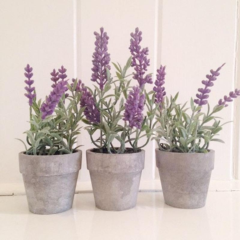 Mini Potted Lavender Plants Sarah Norton Interiors