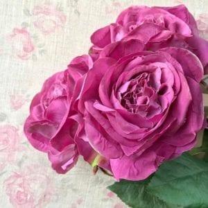 Rose - Cerise