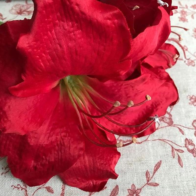 Amaryllis - Red