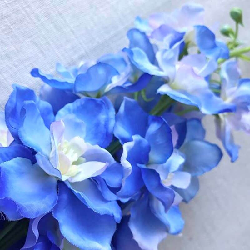 Delphinium Blue Close Up
