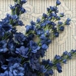 Delphinium - Dark Blue