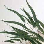 Eucalyptus Spray - Long Leaf