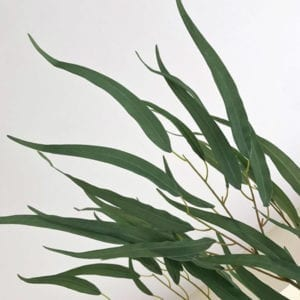 Eucalyptus Spray - Long Leaf