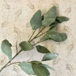 Eucalyptus with Gold Dust