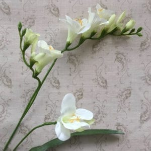 Freesia Spray ~ Cream