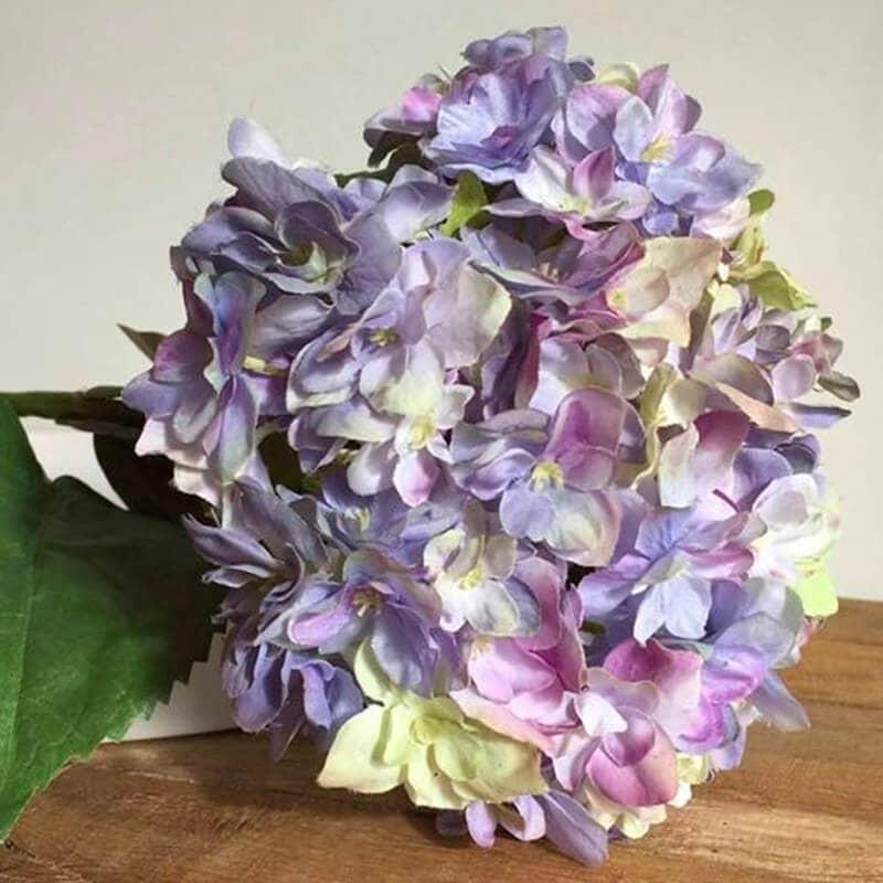 Hydrangea Lilac-Blue