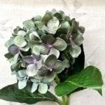 Hydrangea- Olive-Blue