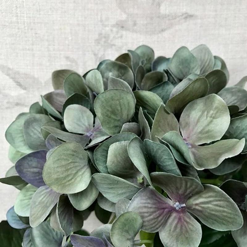 Hydrangea ~ Olive-Blue