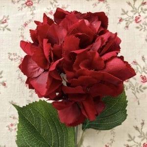 Hydrangea - Red Velvet