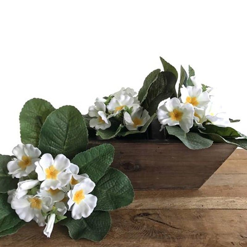 Primrose Plant - White
