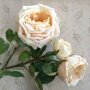 Rose Spray ~ Cream with a hint of Apricot