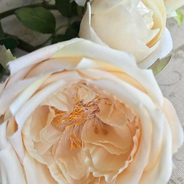 Rose Spray ~ Cream with a hint of Apricot Close Up