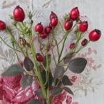 Rose-hip Branch