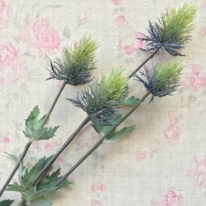 Thistle - Blue-Green